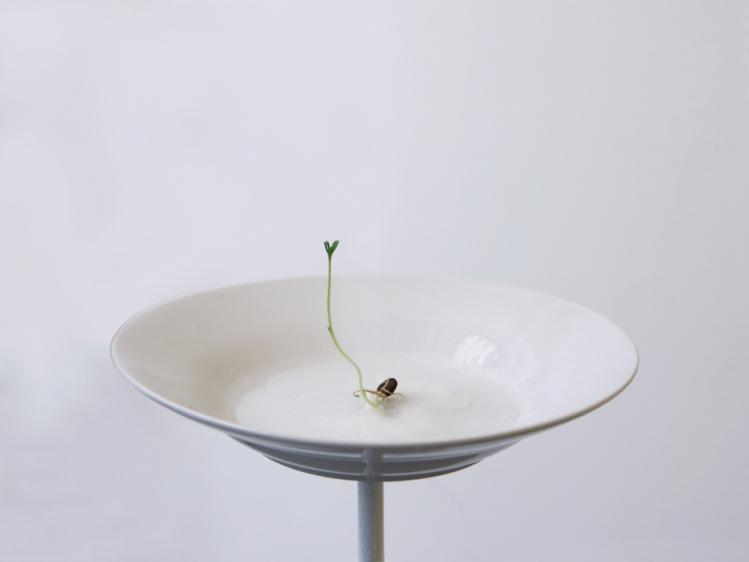 Stéphanie Saadé - Contemplating an Old Memory, 2018